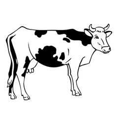 Drawing a cow vector