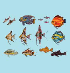 Beautiful aquarium fishes collection vector