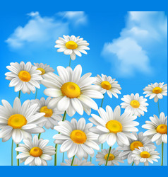 Daisies on blue sky vector