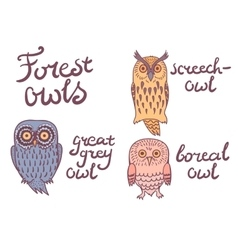 Forest owls collection vector image