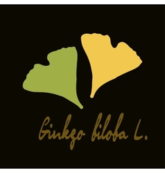 Ginkgo biloba stylizes leaves vector