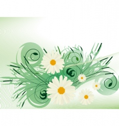 abstract background with white daisies vector image