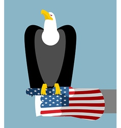 American patriotic eagle hunting bald eagle vector