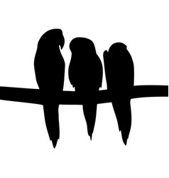 Image of parrots vector