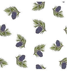 Siberian pine cones and branches vector