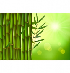 Green bamboo background with sunny vector