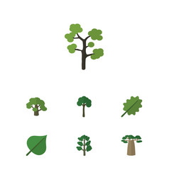 Flat icon nature set of baobab alder hickory and vector