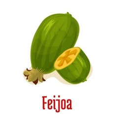 Feijoa exotic isolated fruit vector
