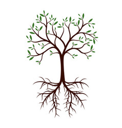 Natural tree with leaves and roots vector