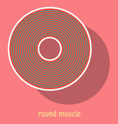 Structure skeletal muscle anatomy vector