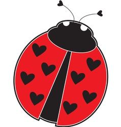 lady bug vector image