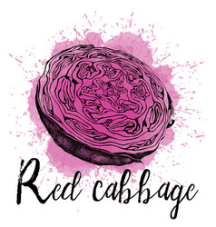 a red cabbage in hand drawn vector image vector image