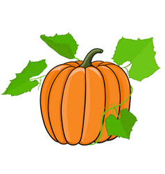 Pumpkin with green leaves vector