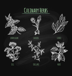 spicy herbs on chalkboard background vector image