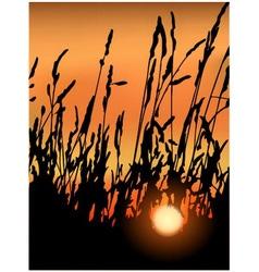 Sunset in grass vector