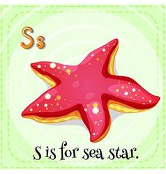 Sea star vector