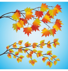 Set of autumn tree vector