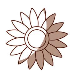 beautifull sunflower isolated icon vector image