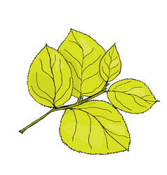 colored hydrangea leaf on vector image vector image