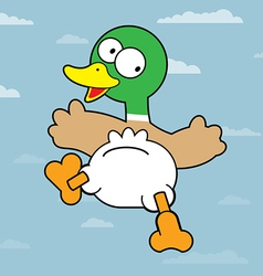 Mallard duck vector