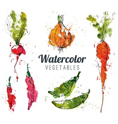Set of watercolor vegetables vector image vector image