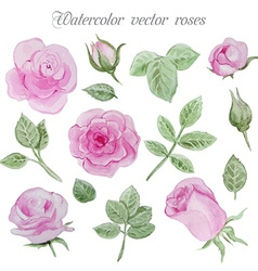 Watercolor roses elements set leaves and flowers vector