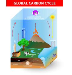 carbon cycle diagram vector image vector image