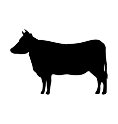 cow animal farm isolated icondesign vector image