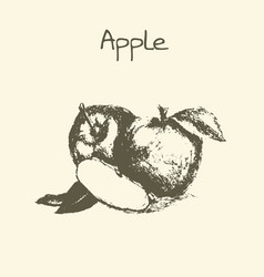 Ink hand drawn vintage apple vintage fruit vector