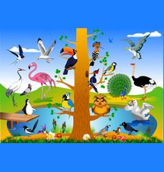 bird kingdom vector image