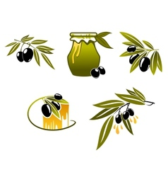 Olive oil and branchs vector