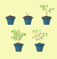 process of growing a houseplant in a pot from seed vector image vector image
