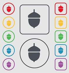 Acorn icon sign symbol on the round and square vector