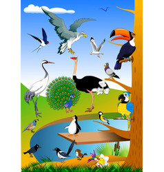 birds in nature vector image
