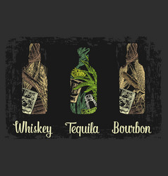 Whiskey and tequila bottle with glass ice cubes vector