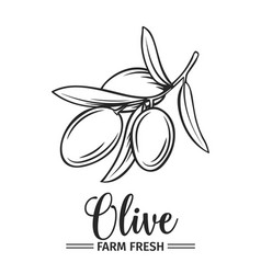 Hand drawn olive icon vector