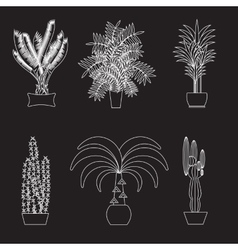 Desert plant of palm trees on white vector image