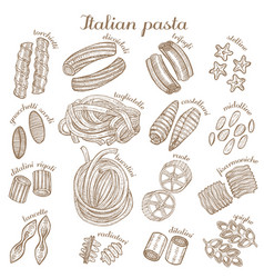 set of different pasta shapes vector image vector image