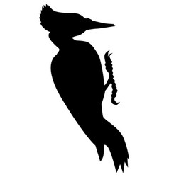 Silhouette of black woodpecker vector
