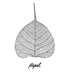 Pipal leaf vector