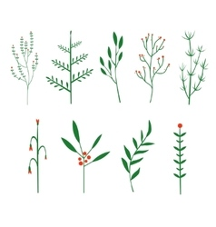 Decorative twigs brush plants vector