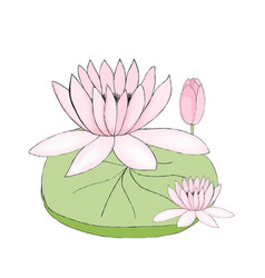 Color of lotus bud and leaf vector