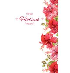 Hibiscus flower banner vector