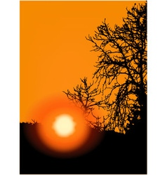 Sunset in trees vector