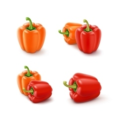 Set of colored orange and red bulgarian peppers vector