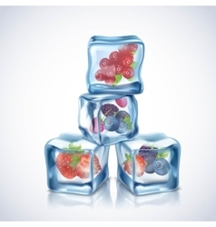 Ice cubes with berries vector