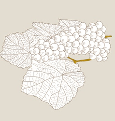 abstract grape with leafs vector image