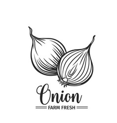 hand drawn onion icon vector image vector image