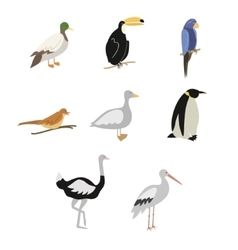 Set of cartoon birds vector