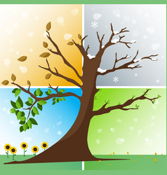 Four seasons in one tree vector